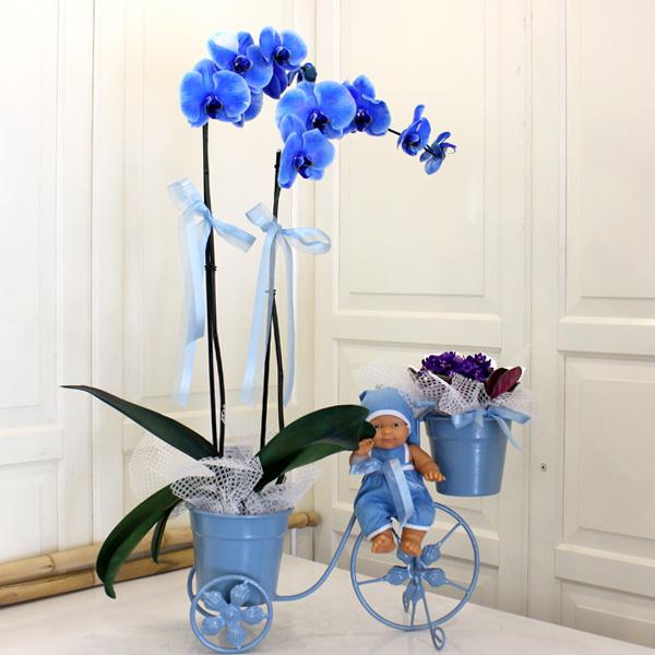 bisiklette mavi orkide