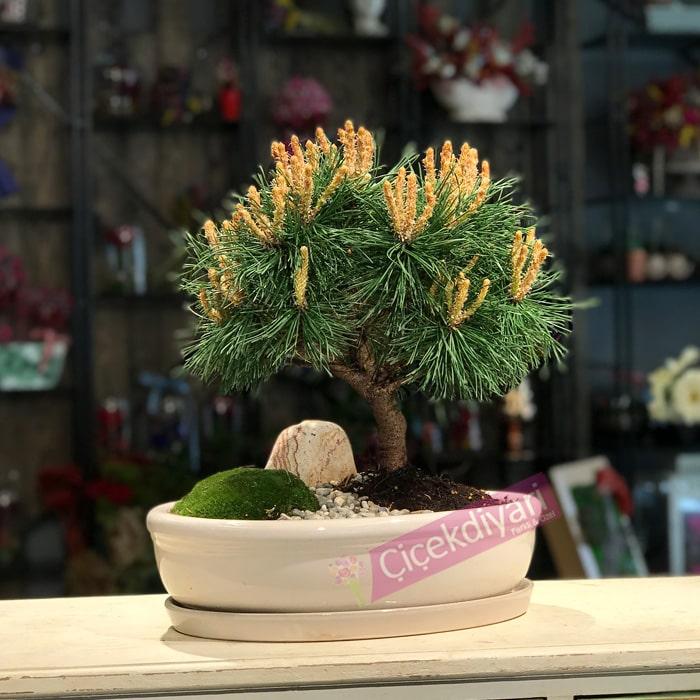 cam-bonsai-turleri