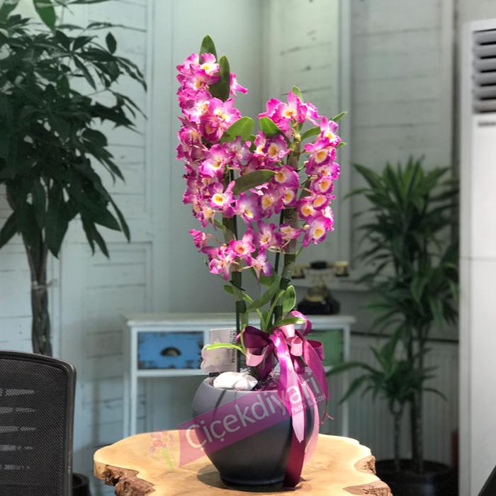 orkideler-neden-pahali