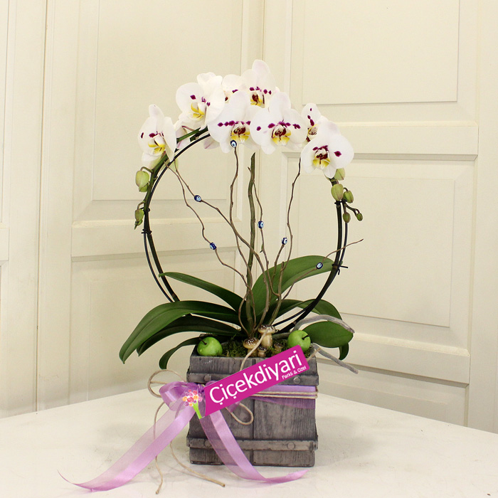 Circle Orchids