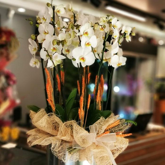 10 Dallý Beyaz Orkide