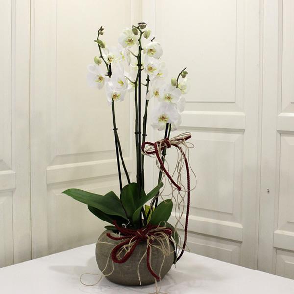 4 Dallı Orkide