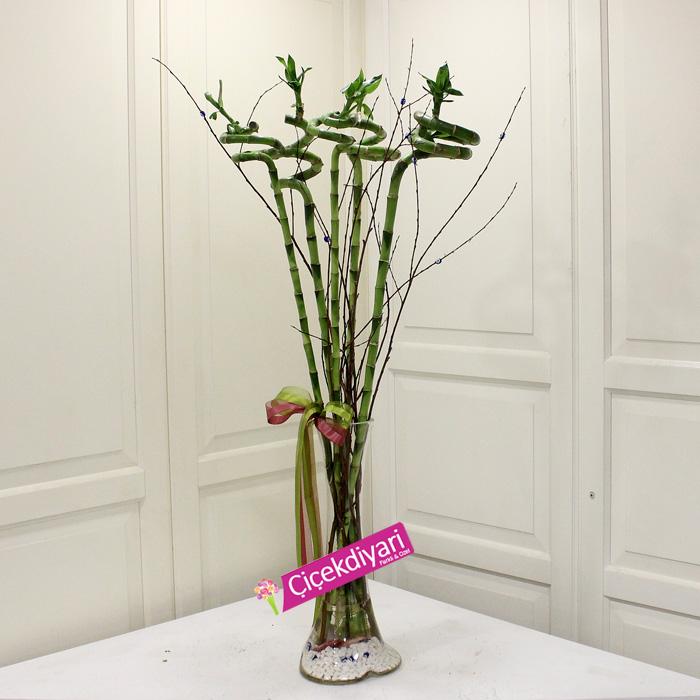5 Luky Bambu