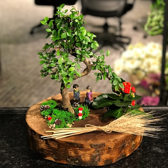 Aðaçtaki Bonsai