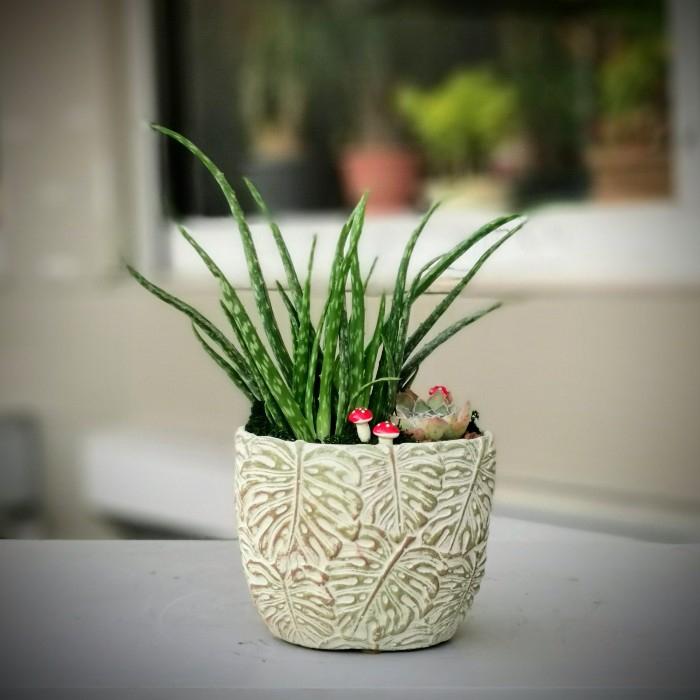 Aloe Vera Bitkisi