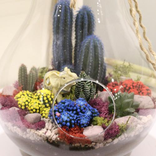 Renkli Kaktüs Terrarium