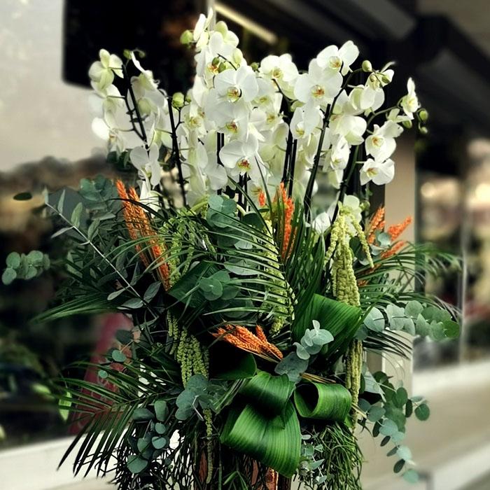 Elysion - Orkideler