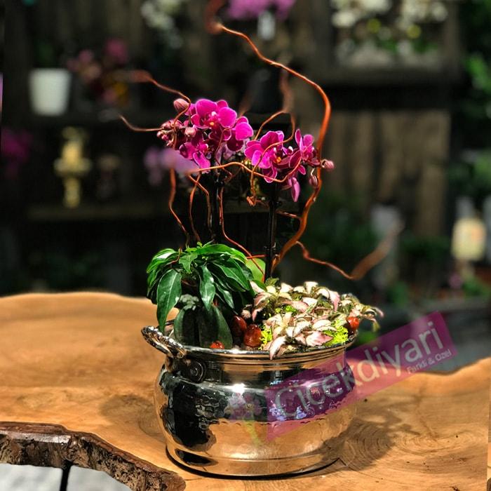 Bakýrda Açan Orkide