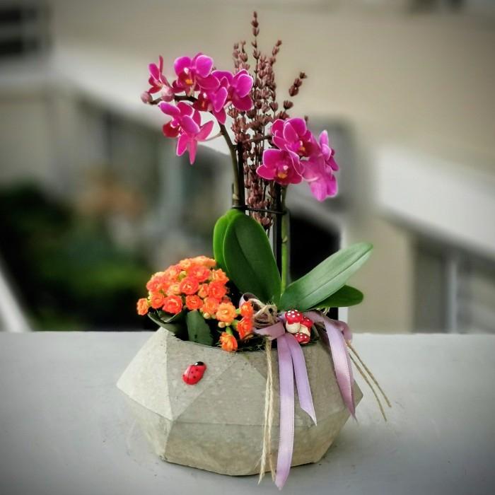 Taþta Açan Orkide