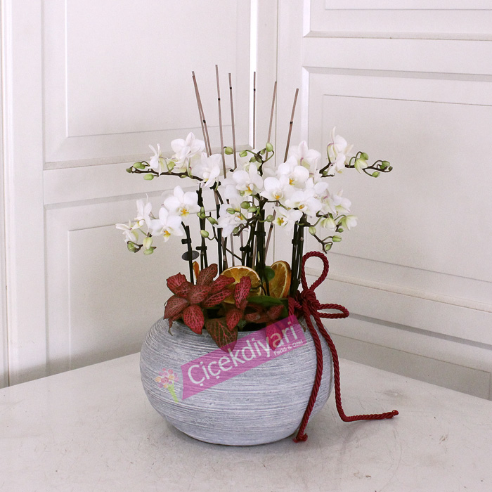 Beyaz Mini Orkideler