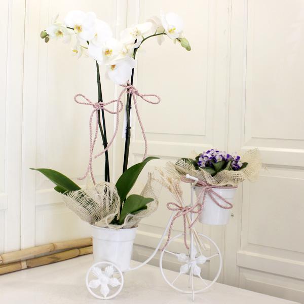 Orkide ve Menekşe