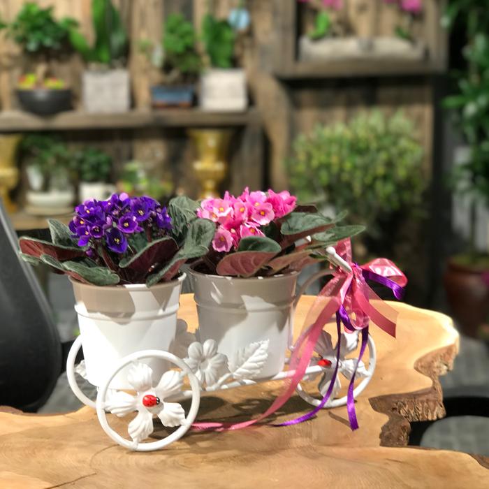 Bisiklette Menekþeler