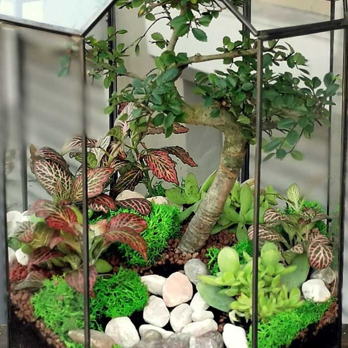 Bonsai Terarium
