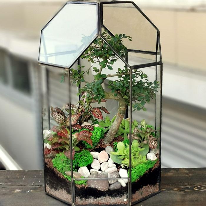 Bonsai Terarium