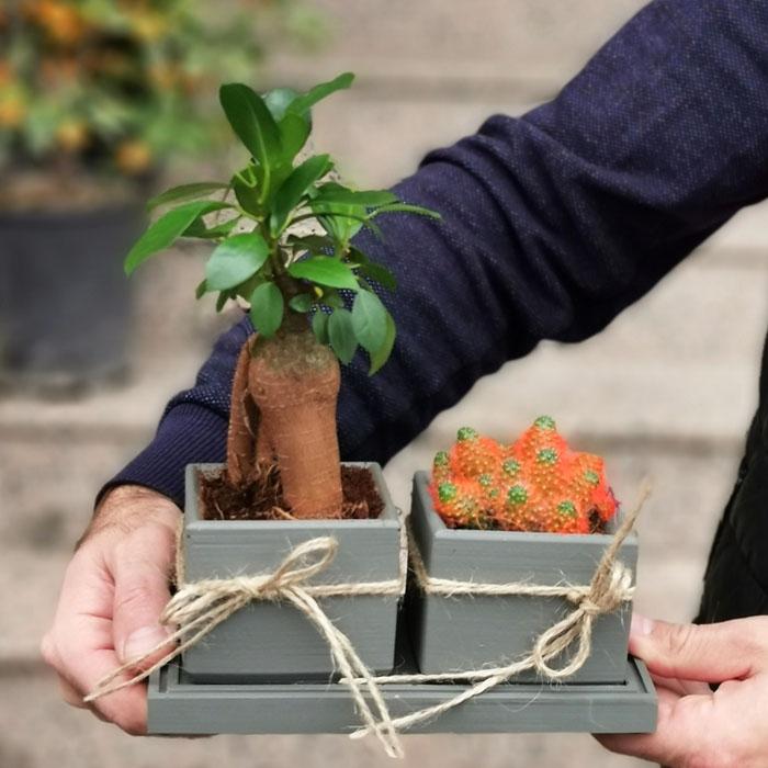 Bonsai ve Kaktüs