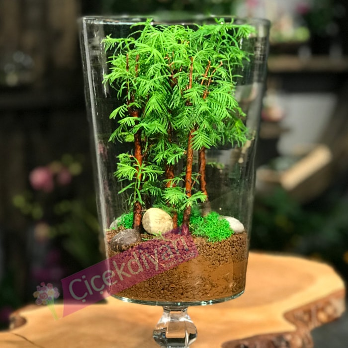Cam Ýçinde Bonsai