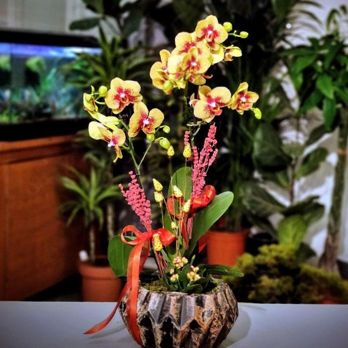 Charmer Orkide ve Kalanchoe