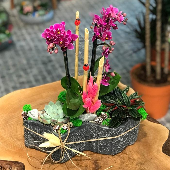 Çýraðan Orkide Tasarým