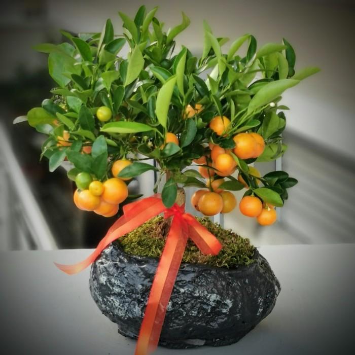 Citrus Bonsai