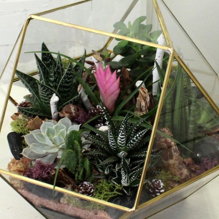 Aloetiki Teraryum