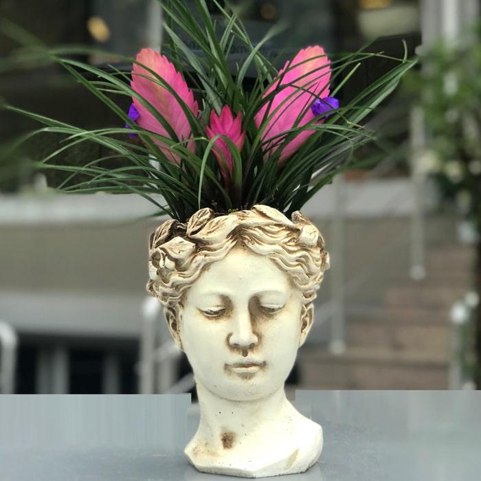 Tilandisia - Afrodit