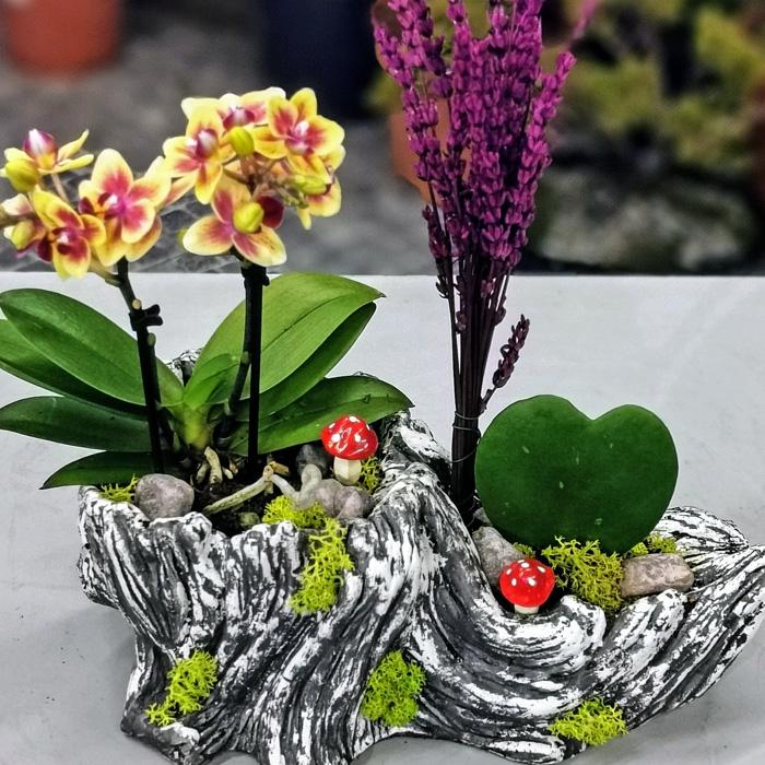 Kalp Çiçeði Ve Orkide