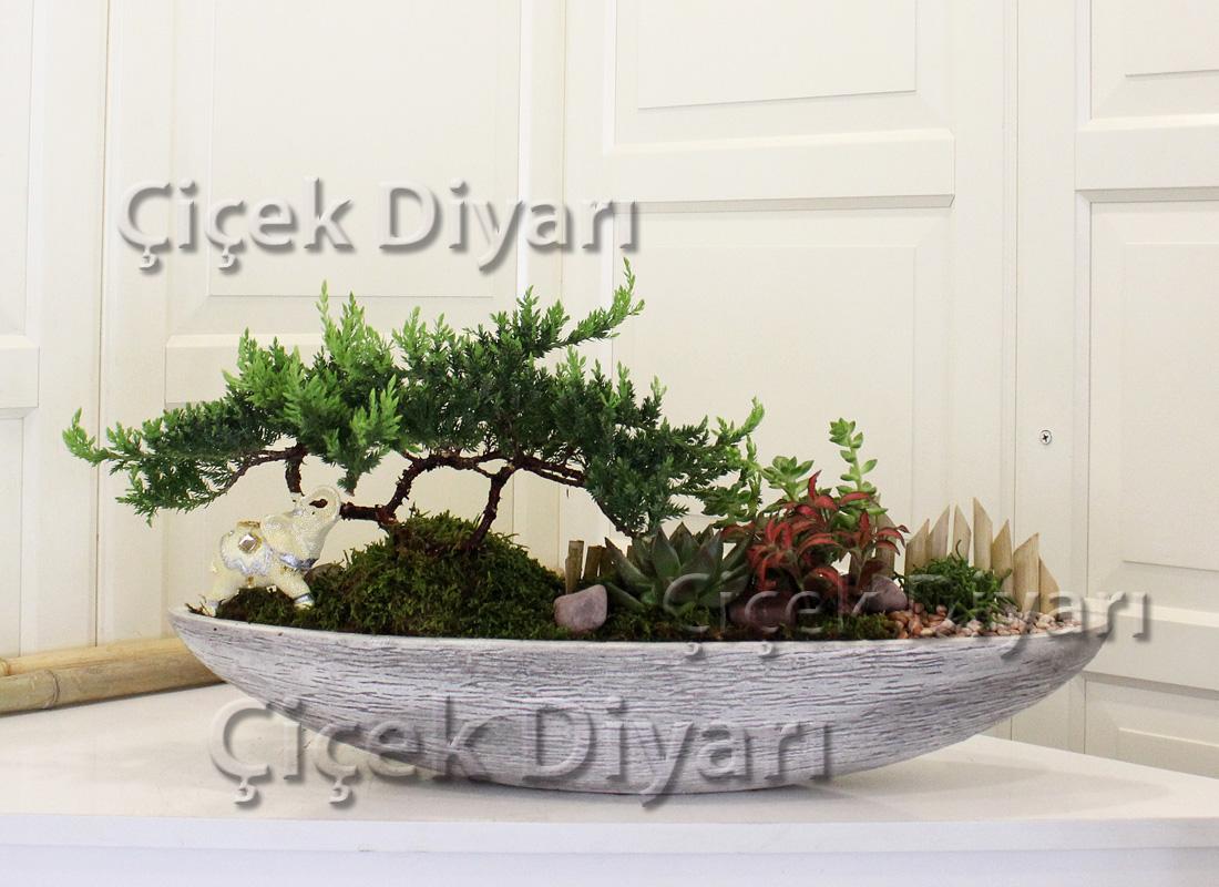 Juniperus Bonsai ve Bahçe