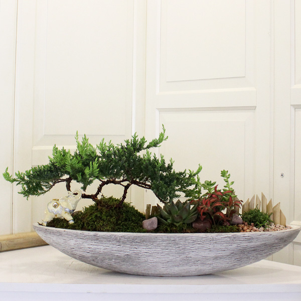 Juniperus Bonsai ve Bah�e