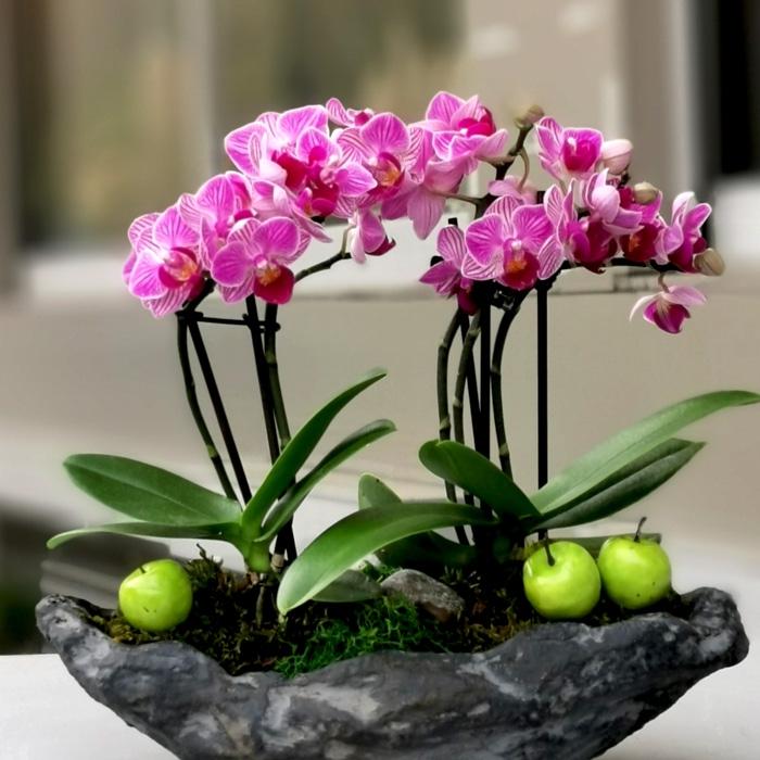 Dikilitaþ Mini Orkideler