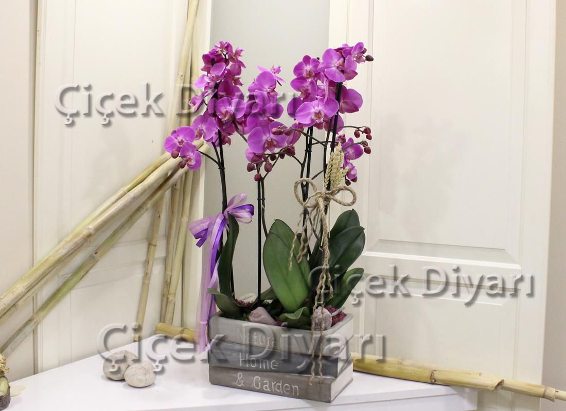 Kitapta Orkideler