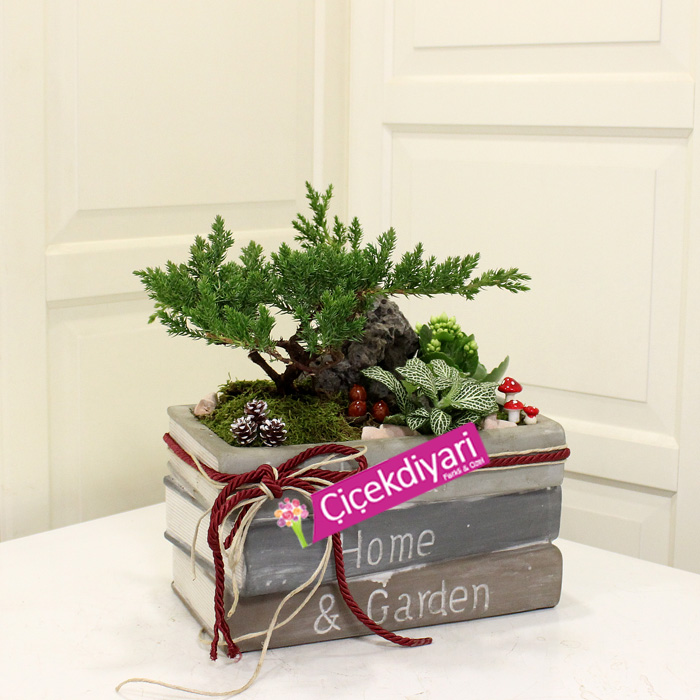 Kitapta Juniperus Bonsai