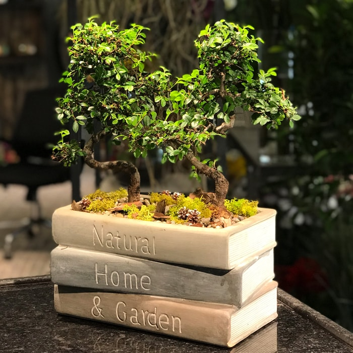 Kitap ve Bonsai