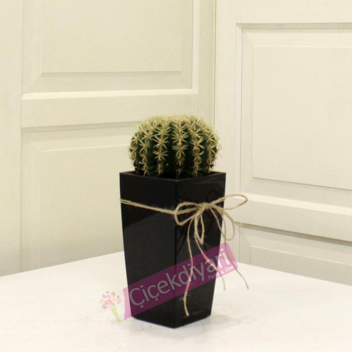 kucuk-echinocactus-lechuza-saksi-resim.jpg