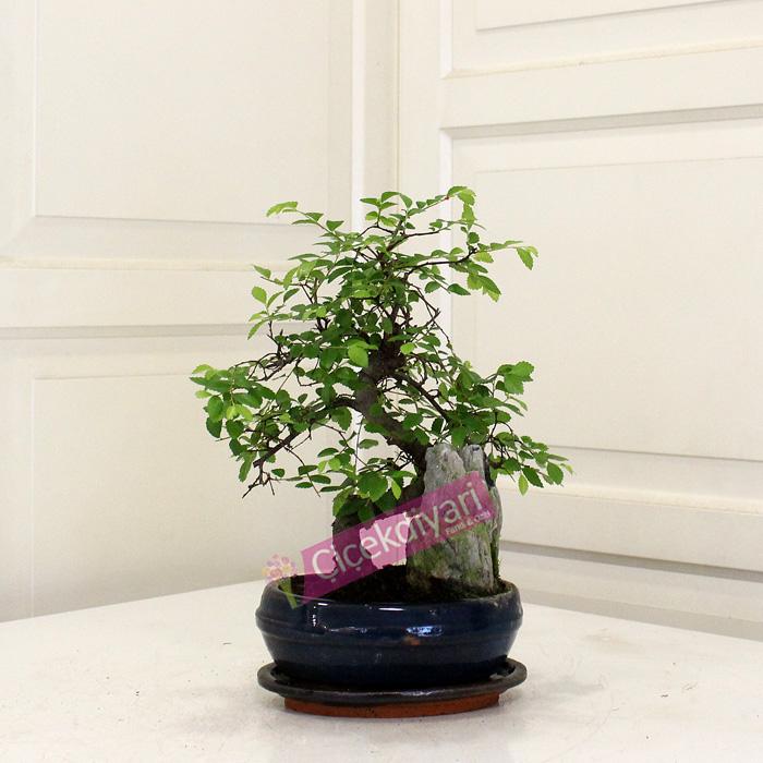 Küçük Kayalı Bonsai