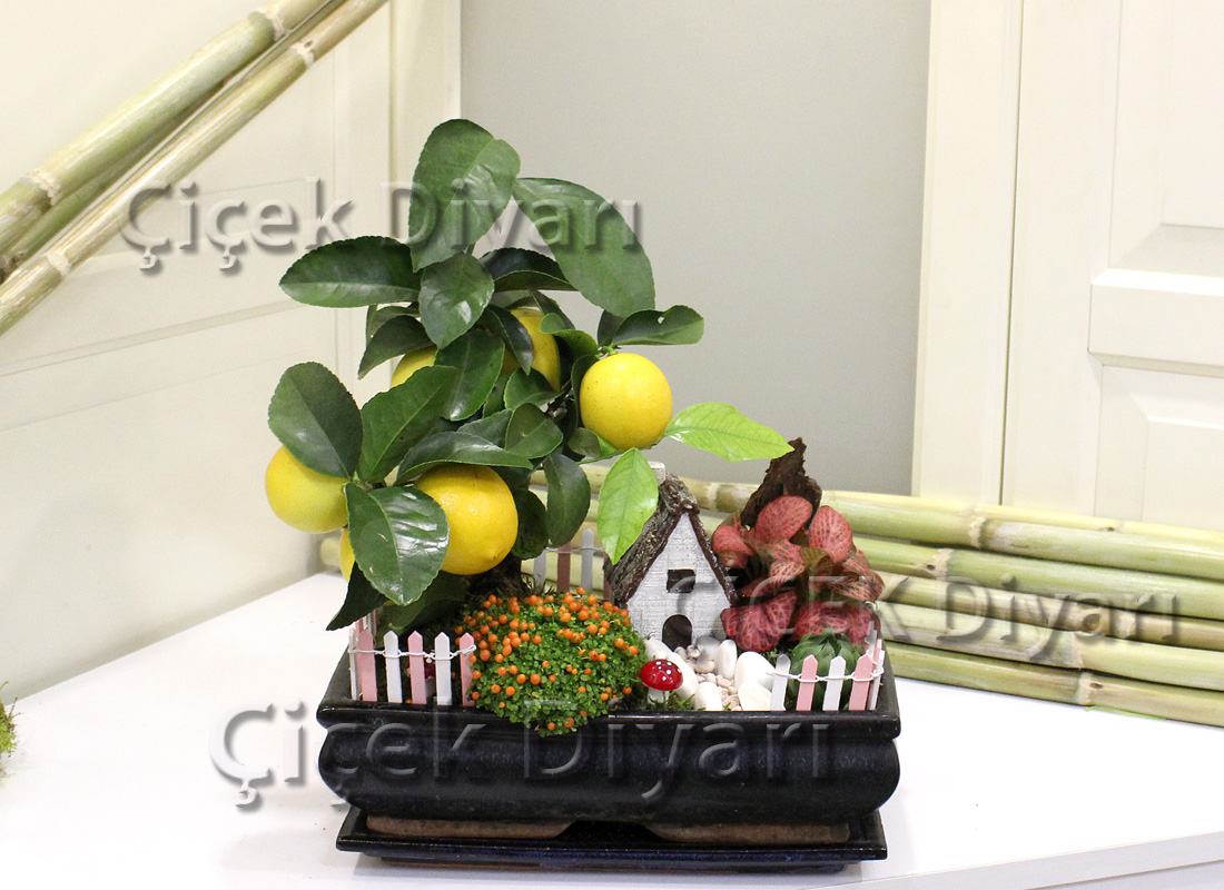Limon Bahçesi