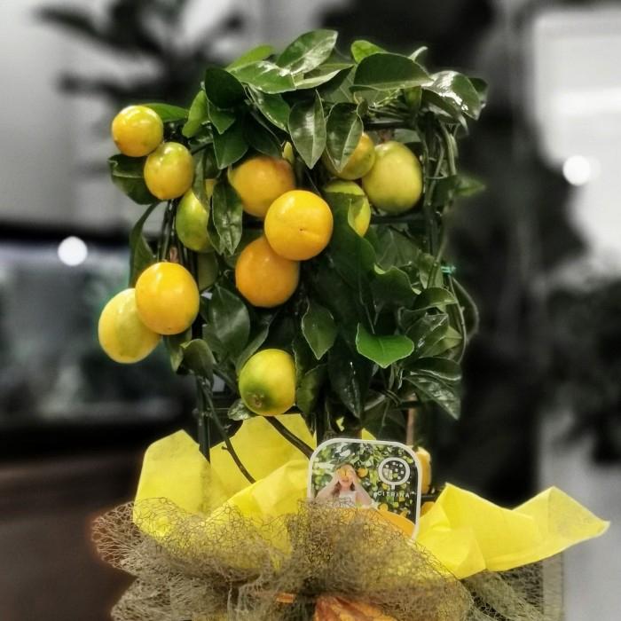 Lisa Lemon
