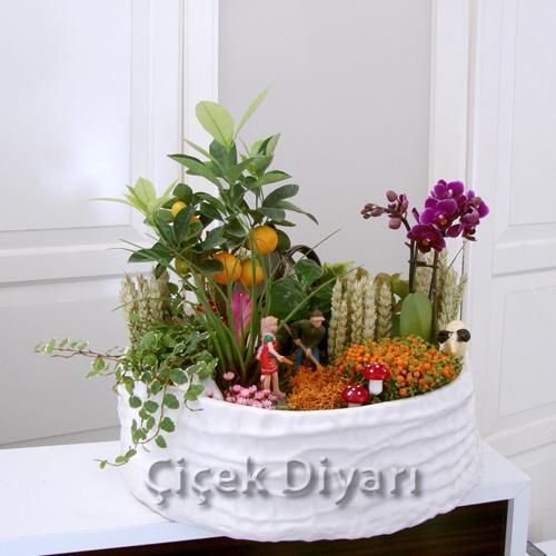 Mandalina ve Orkide