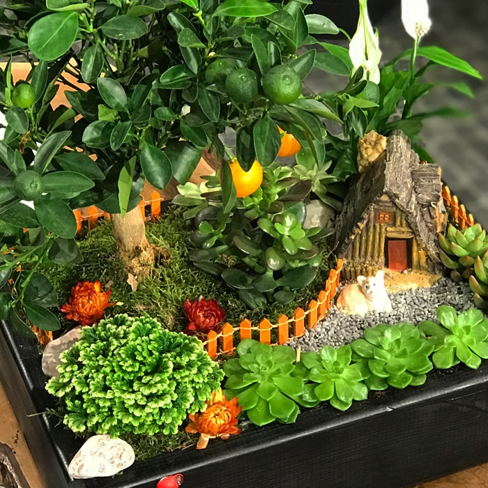 HüsneNazýn Mandalina Bahçesi