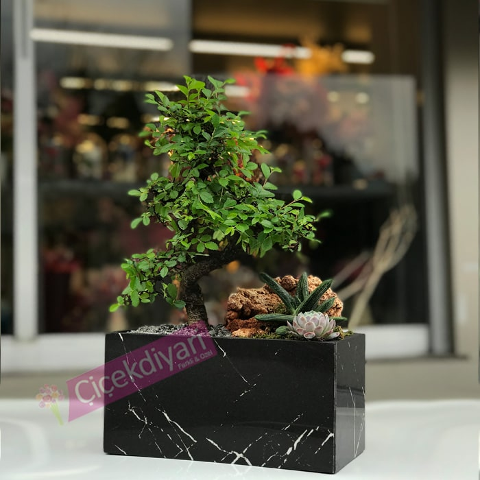 Mermer Saksýda Bonsai