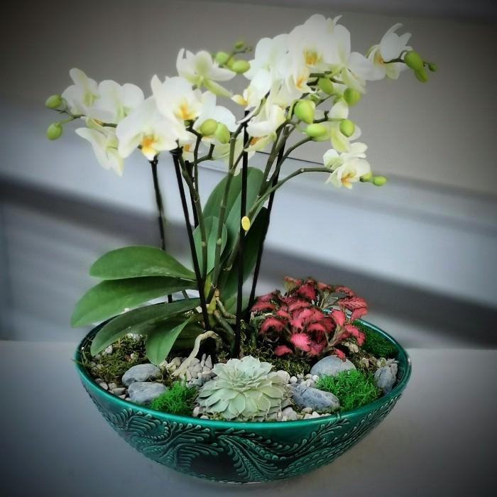 Minai Serisi Bougetto Orkide