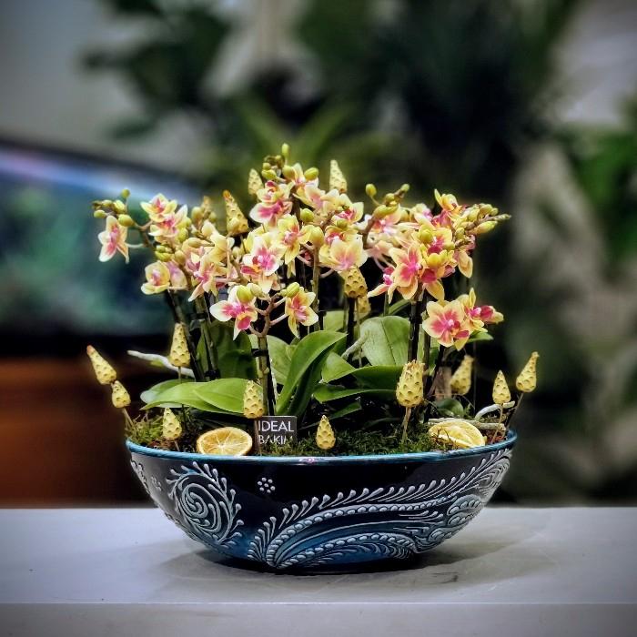 Turkuvaz Serisi Orkide Bahçesi