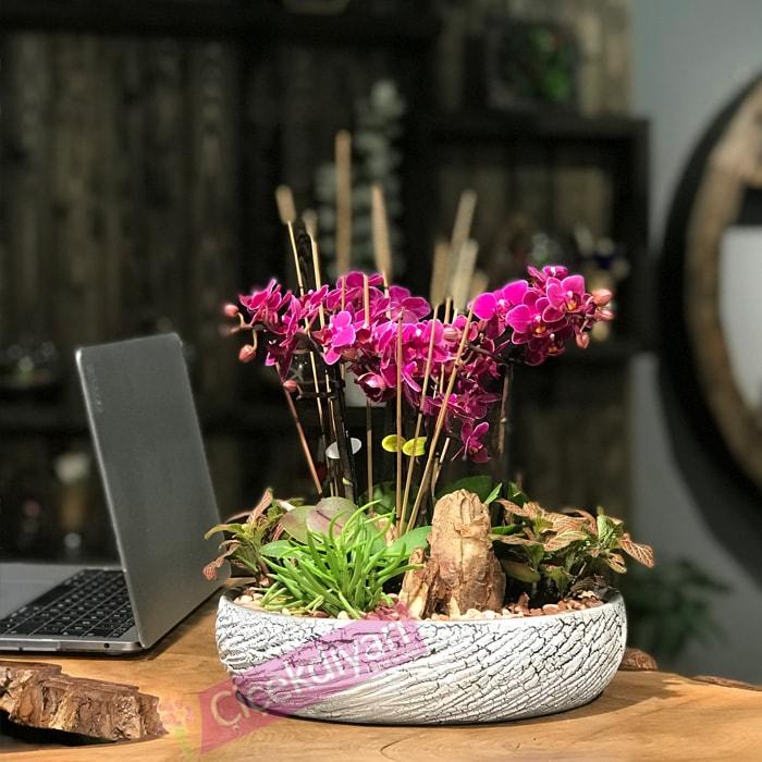 Fleur Mini Orkideler