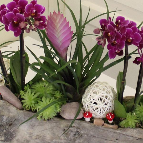 Orkide ve Tilandisialar