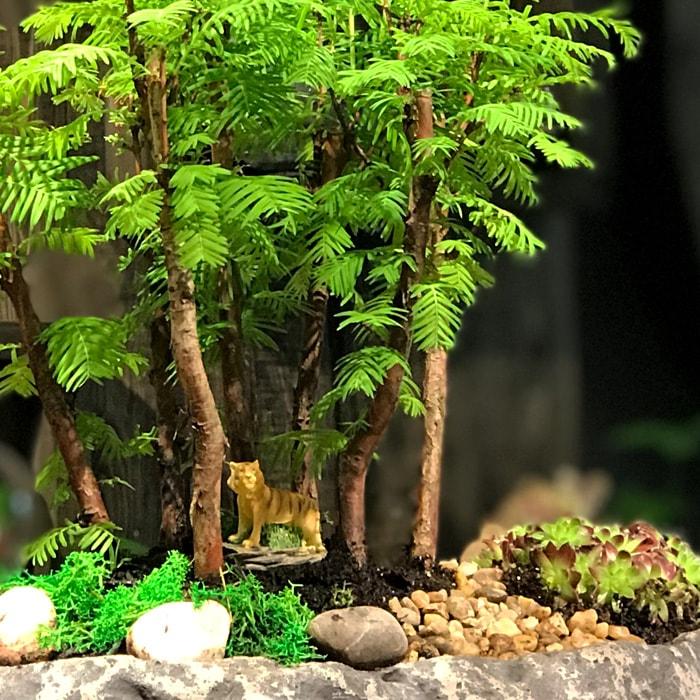 Mini Orman - Larex
