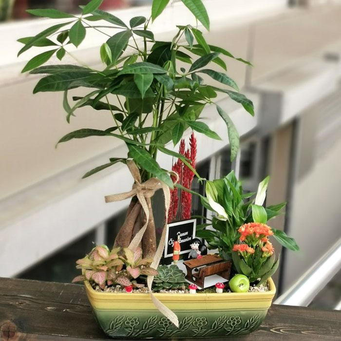 Öðretmenime Bonsai Bahçe