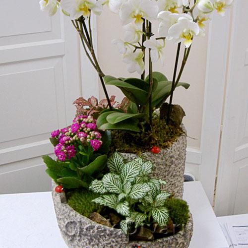 Orkide Kalesi