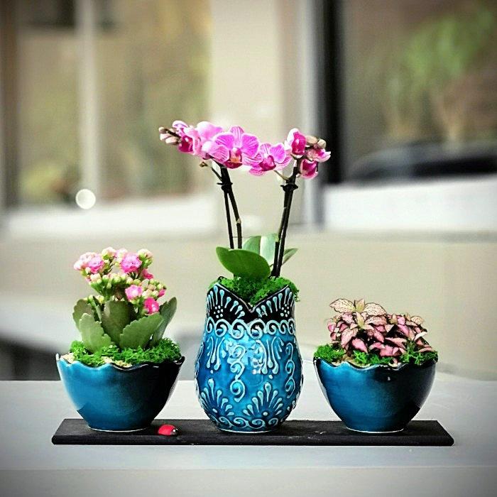 Minai Serisi - Orkide Kalanchoe Phitonia