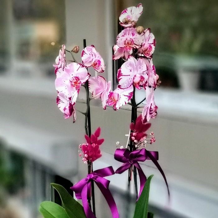 Özel Koleksiyon MagicArt Orkide