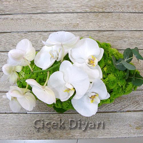Beyaz Orkidem