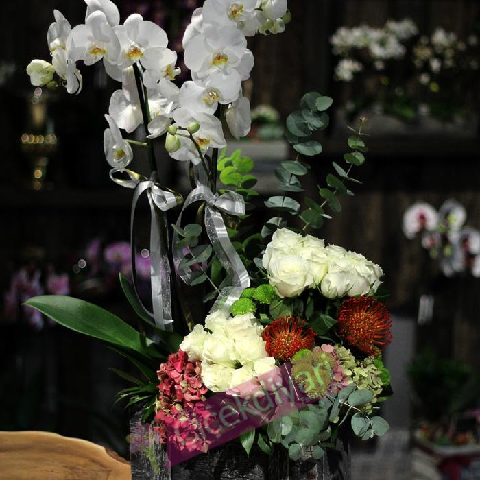 Beyaz Orkide ve Güller